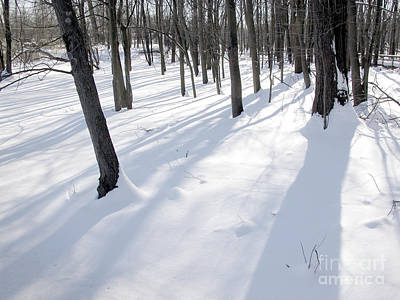 Photograph - Trees Snow by Tom Brickhouse