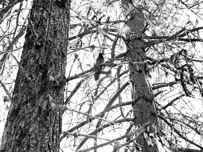 Photograph - Trees by Tarey Potter