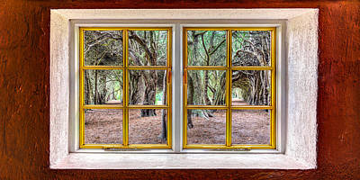 Photograph - Trees Through A Window by Semmick Photo