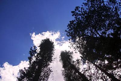 Photograph - Trees To The Clouds by Michael Courtney