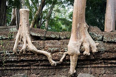 Integrated Photograph - Trees United by Artur Bogacki