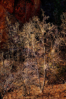 Photograph - Trees West Fork Trail by Bob Coates