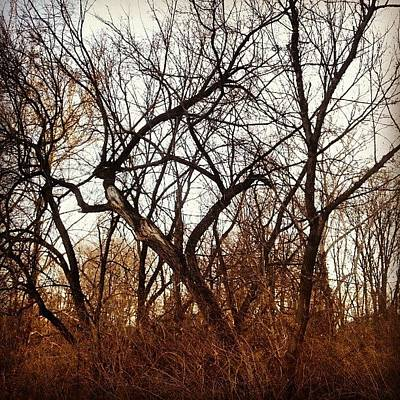 Skylines Photograph - Trees With Figures by Genevieve Esson