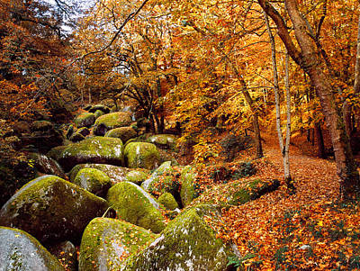 Fallen Leaf Photograph - Trees With Granite Rocks At Huelgoat by Panoramic Images