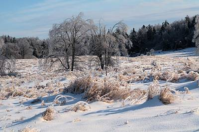 Photograph - Trees With Ice by Douglas Pike