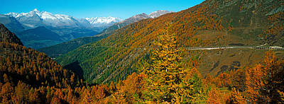 Trees With Road In Autumn At Simplon Print by Panoramic Images