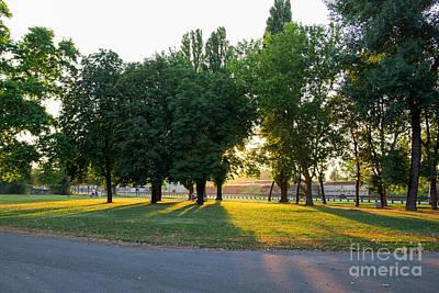 Trees With Sunlight Original