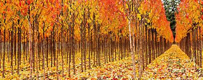 Treescape 2 Art Print