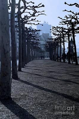Treesinshadow Original