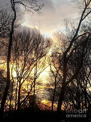 Photograph - Treesome Sunset by Brianna Kelly