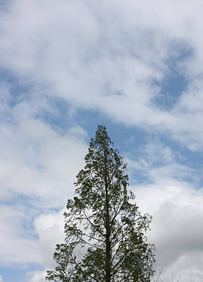 Photograph - Treetop by Michelle Miron-Rebbe