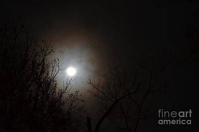 Photograph - Treetop Moonlight 2013 by Maria Urso