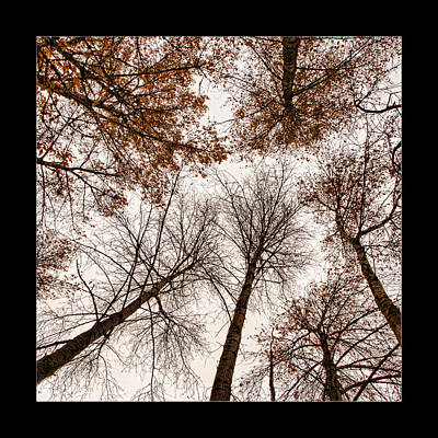 Photograph - Treetops by Bonnie Bruno