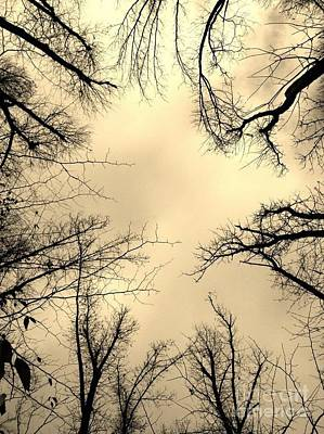 Photograph - Treetops In Sepia by Maureen Cavanaugh Berry