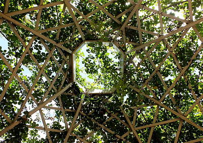 Photograph - Trellis Roof by Guy Pettingell