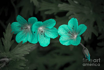 Photograph - Trendy Turquoise by Susan Parish