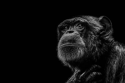 Chimpanzee Photograph - Trepidation by Paul Neville