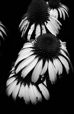 Photograph - Tres Flora by Kelly Hazel