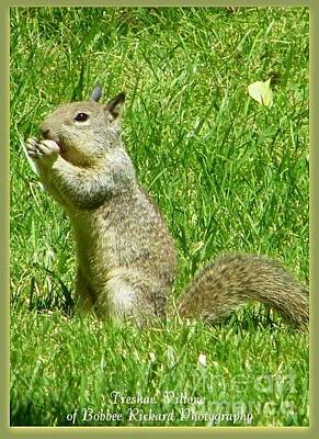 Photograph - Treshaes Squirrel by Bobbee Rickard
