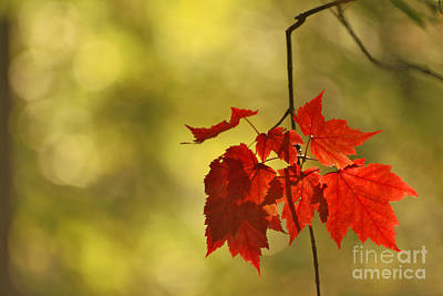 Photograph - Tresors D'automne by Aimelle