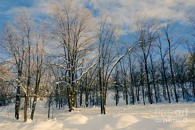 Print Photograph - Tress In The Snow by Gloria Pasko