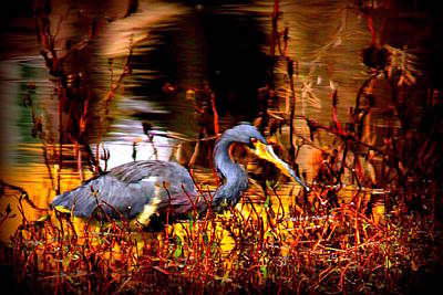 Lady Bug - Tri Colored Heron - Reflection by Travis Truelove