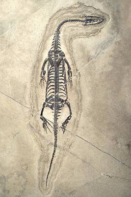 Triassic Photograph - Triassic Aquatic Reptile by Science Photo Library