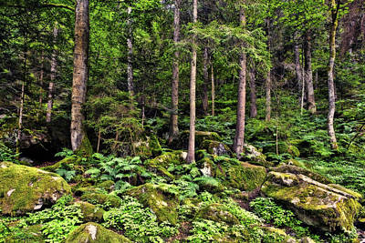 Ferns Photograph - Triberg Forest by Marcia Colelli