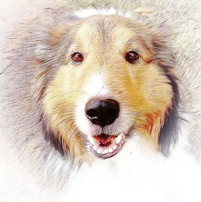 Shetland Sheepdog Digital Art - Tribute To Jack by Virginia Folkman