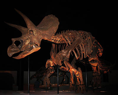 Photograph - Triceratops Horridus by Connie Fox