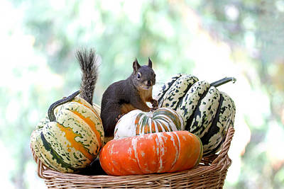 Photograph - Trick Or Treat Squirrel by Peggy Collins