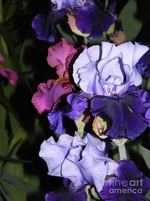 Photograph - Tricolor Night Blossoms by Ronda Douglas