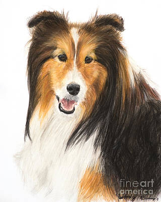 Painting - Tricolor Shetland Sheepdog by Kate Sumners
