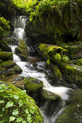Photograph - Trillium Falls by Joe Doherty
