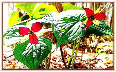 Trillium In The Woods Art Print