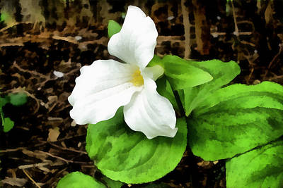 Photograph - Trillium In The Woods by Michelle Calkins