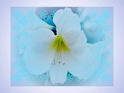 Digital Art - White Lily by Larry Capra
