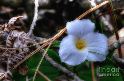 Art Print featuring the photograph Trillium On County C by Trey Foerster