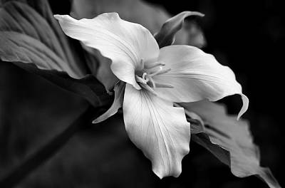 Photograph - Trillium Wild Flower Black And White by Jennie Marie Schell