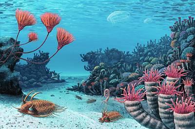 Trilobite Photograph - Trilobites Of The Early Devonian by Richard Bizley