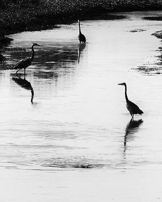 Trilogy - Black And White Art Print by Belinda Greb