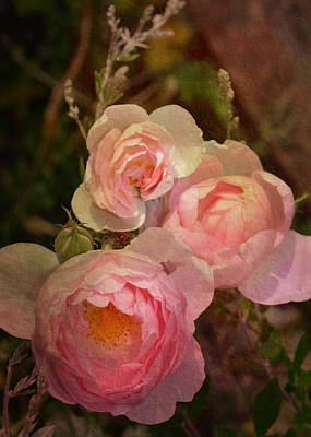 Photograph - Trio Of Antique Heirloom Roses by Carla Parris