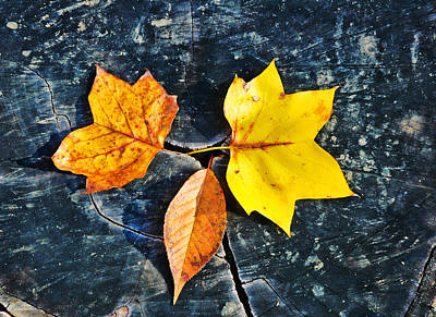 Photograph - Trio Of Autumn Leaves by Gary Slawsky