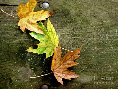 Photograph - Trio Of Leaves by Marilyn Smith