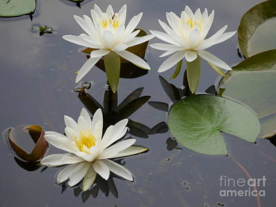 Photograph - Trio Of Lilies by Jane Ford