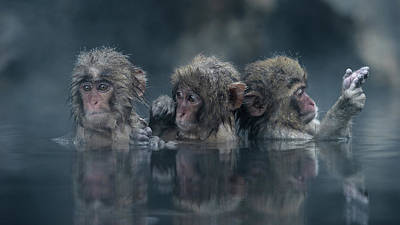 Monkey Wall Art - Photograph - Trio by Takeshi Marumoto