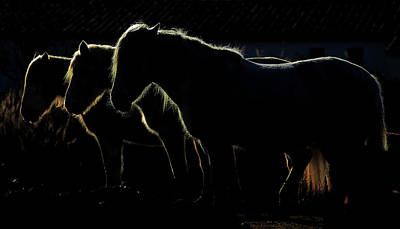 Dark Horse Photograph - Tripla?s by Michel Romaggi