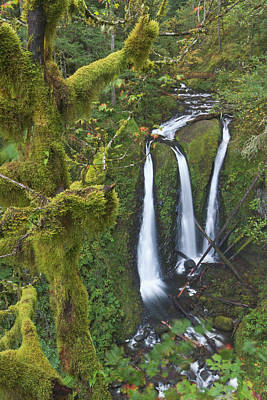Sutton Photograph - Triple Falls On Oneonta Creek, Columbia by William Sutton