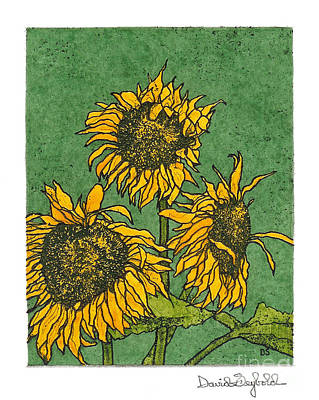 Triple Sunflowers Etching With Full Background Print by John Stephens
