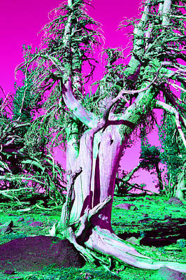 Whitebark Pines Photograph - Trippy Tree by Dustin Brown